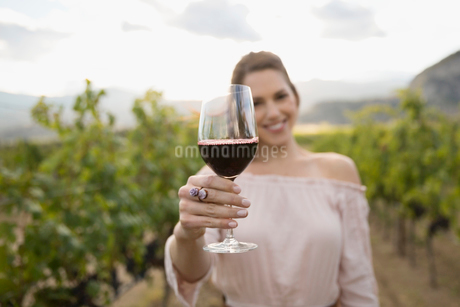 Portrait smiling woman wine tasting drinking red wine in vineyardの写真素材 [FYI02860493]