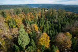 Autumnal mixed forest, bird's eye view, northern Blackの写真素材 [FYI02860699]