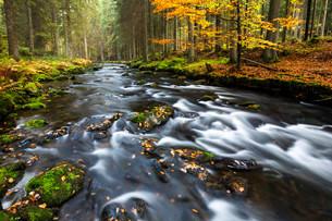 GroBer Regen river, autumn, Bavarian Forest National Parkの写真素材 [FYI02860704]
