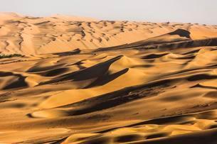 Sand dunes in desert near Al Hamanm, Rub' al Khali orの写真素材 [FYI02860789]