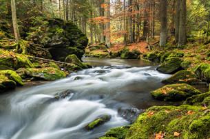 GroBer Regen river, autumn, Bavarian Forest National Parkの写真素材 [FYI02860901]
