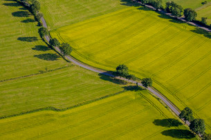 Aerial photo, country road with trees, Schmallenbergの写真素材 [FYI02860934]