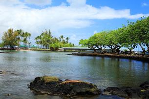 ハワイ島ヒロのココナッツアイランドの写真素材 [FYI02861301]