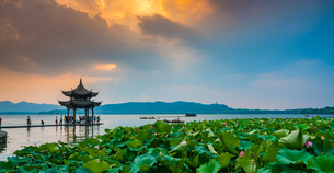 The mid-lake pavilion and lotus against the skyの写真素材 [FYI02861417]