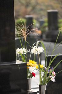 墓石と供花の写真素材 [FYI02861460]