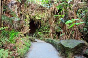 ハワイ島 キラウエア火山 サーストン・ラバ・チューブの写真素材 [FYI02861461]