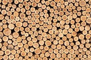 積み上げられた材木の断面の写真素材 [FYI02861503]