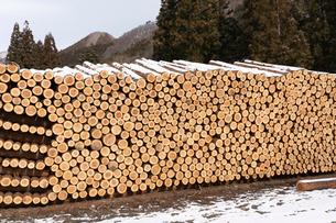 積み上げられた材木の断面と雪の写真素材 [FYI02861572]