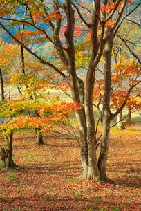秋の桜山公園の写真素材 [FYI02861672]