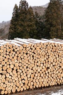 積み上げられた材木の断面と雪の写真素材 [FYI02861720]