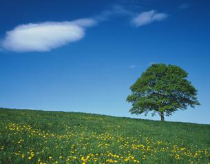 一本の木の写真素材 [FYI02861731]