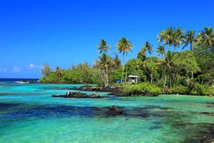 ハワイ島ヒロのカールスミスビーチパークの写真素材 [FYI02861743]