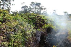 ハワイ島 キラウエア火山 スチームベントの写真素材 [FYI02861772]