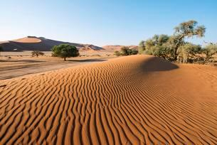 Sand dunes in Namib Desert, Namib-Naukluft National Parkの写真素材 [FYI02861858]