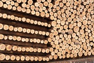 積み上げられた材木の断面の写真素材 [FYI02861863]