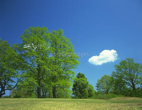 新緑の写真素材 [FYI02862572]