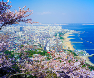鉢伏山から桜 (ソメイヨシノ)と神戸市街遠望の写真素材 [FYI02866934]