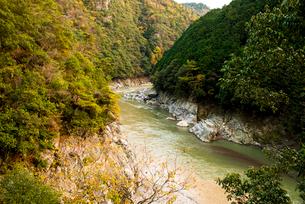 秋の桂川渓流の写真素材 [FYI02866978]