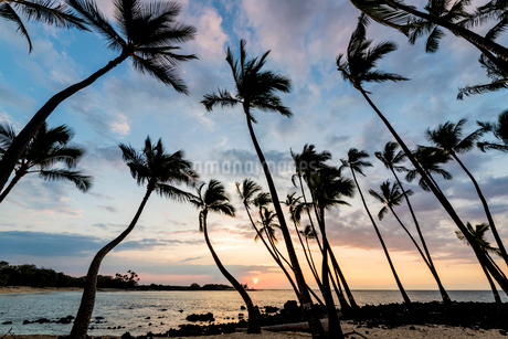 ヤシの木の間から見える夕日の写真素材 [FYI02867366]
