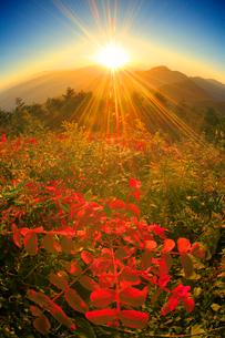 朝日の光芒と冠着山などの山並みと紅葉の樹林の写真素材 [FYI02867787]