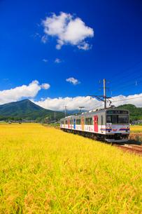 別所線の電車と稲穂実る田園の写真素材 [FYI02867910]