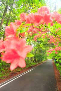 ツツジと新緑の新軽井沢の別荘地の道路の写真素材 [FYI02867913]