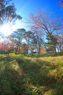 陣場山城跡の神明宮と木もれ日の写真素材 [FYI02868091]