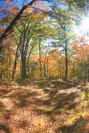 紅葉の女神岳城跡の本郭跡と木もれ日の写真素材 [FYI02868093]