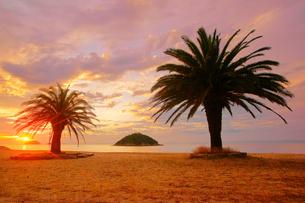小部ビーチとナツメヤシと夕日と小島の写真素材 [FYI02868562]