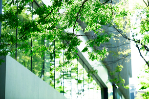 ビルと緑の写真素材 [FYI02870830]