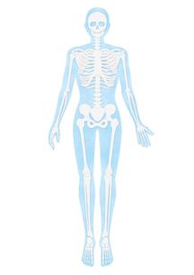人体の骨格イラスト・水色のイラスト素材 [FYI02871358]