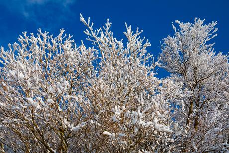 御在所の樹氷の写真素材 [FYI02871550]