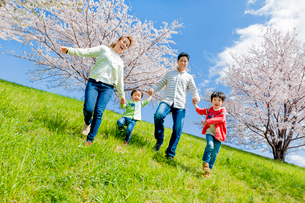 桜の咲く土手を下る4人家族の写真素材 [FYI02871872]