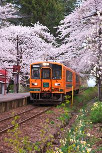津軽鉄道と芦野公園の桜の写真素材 [FYI02872661]