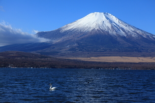 山中湖と富士山の写真素材 [FYI02879627]