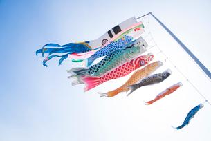 鯉のぼりの写真素材 [FYI02880087]