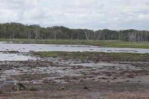 野付半島の風景 ナナワラの写真素材 [FYI02893567]