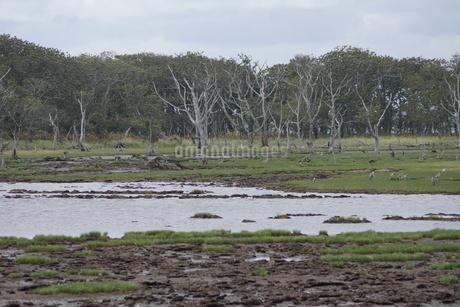野付半島の風景 ナナワラ(野鳥の群れ)の写真素材 [FYI02893573]