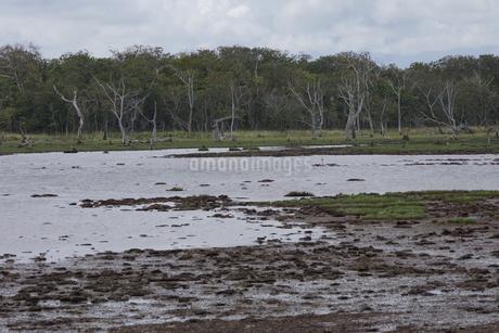 野付半島の風景 ナナワラの写真素材 [FYI02893574]