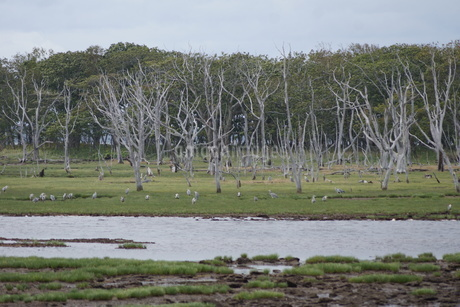 野付半島の風景 トトワラの写真素材 [FYI02893576]