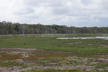 野付半島の風景 ナナワラの写真素材 [FYI02893600]