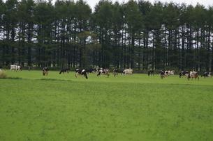 北海道中標津の風景 酪農地帯の写真素材 [FYI02893603]