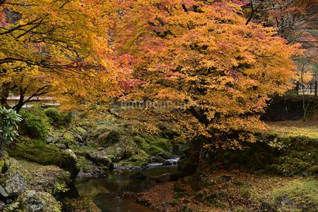 渓流と紅葉の写真素材 [FYI02893619]