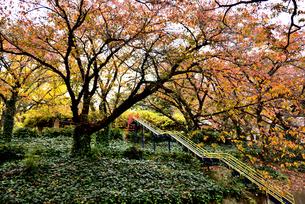紅葉の公園の写真素材 [FYI02893623]
