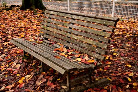 落葉に囲まれた無人のベンチの写真素材 [FYI02893625]