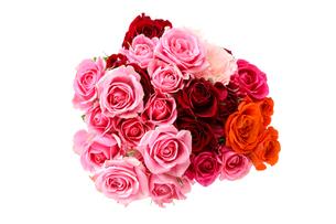 薔薇の花束の写真素材 [FYI02893842]
