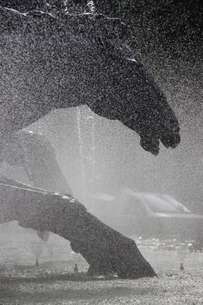 噴水と馬の銅像の写真素材 [FYI02893853]