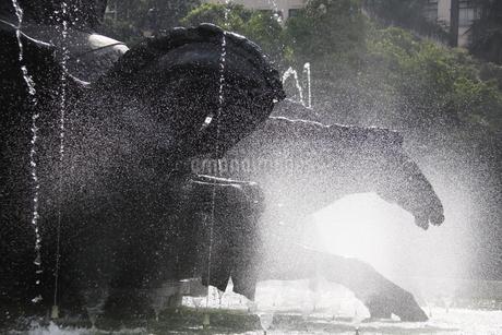 噴水と馬の銅像の写真素材 [FYI02893854]