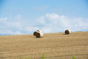 収穫が終わった麦畑とムギロールの写真素材 [FYI02896030]