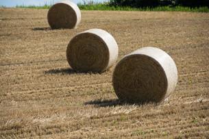 収穫が終わった麦畑とムギロールの写真素材 [FYI02896031]